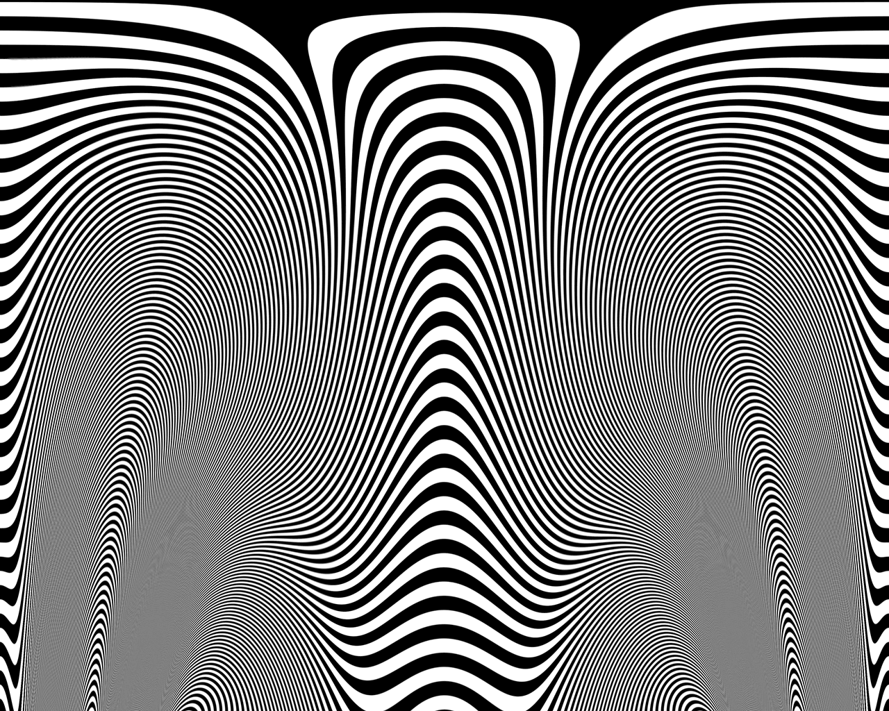 Zebra skin - photo#13